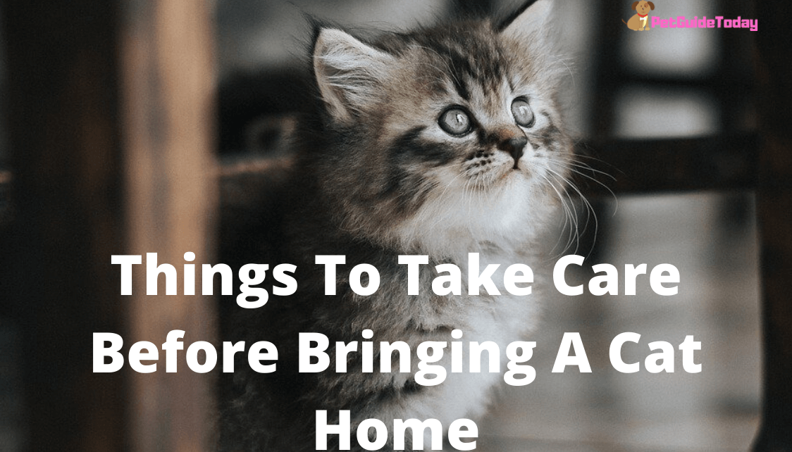 Things To Take Care Before Bringing A Cat Home