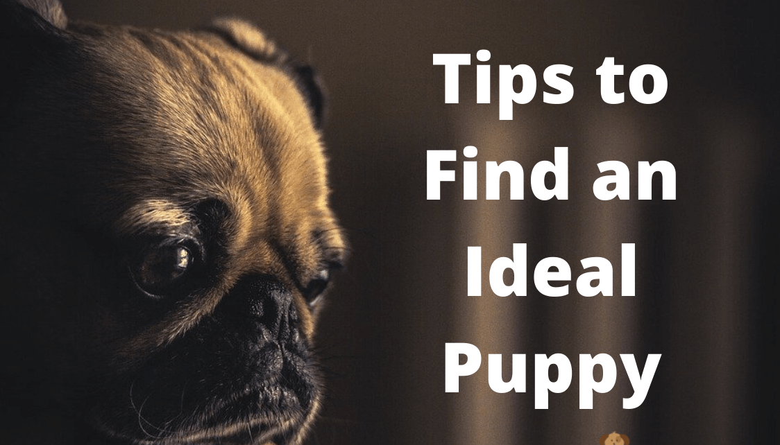 If you are in the market for a new pet, or you are thinking about adopting a pet in the future, read on to learn some tips to find an ideal puppy