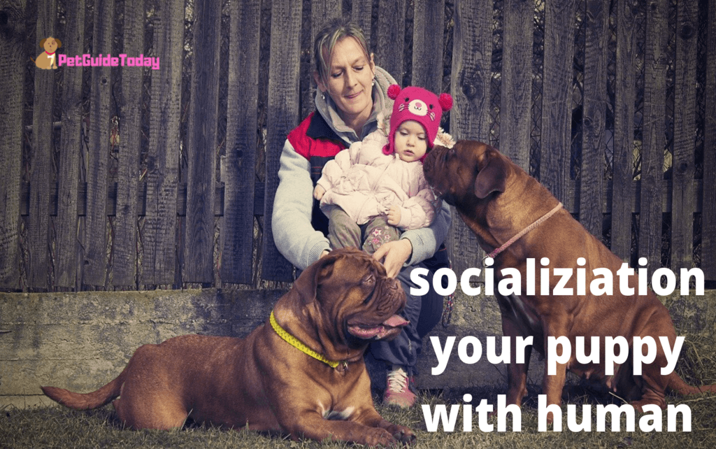 Socialization Your Puppy With Human
