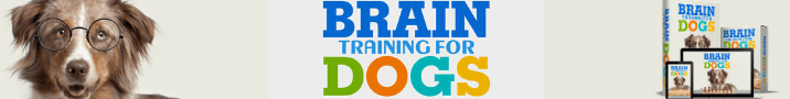 brain training for dog