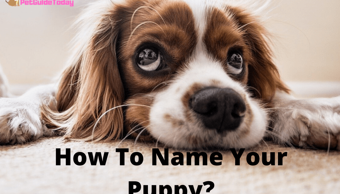 How to name your puppy