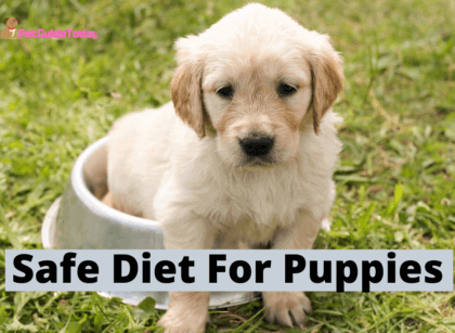 Safe Diet For Puppies