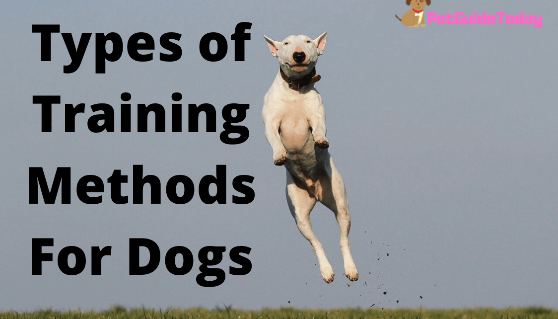 Types of Training Methods For Dogs