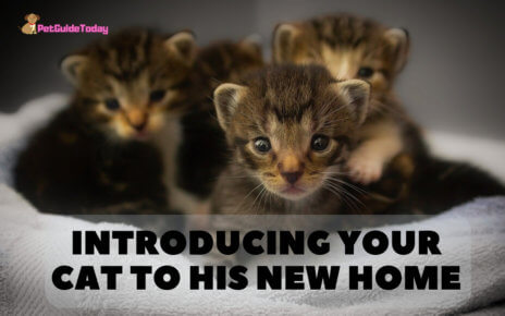 Introducing your cat to his new home