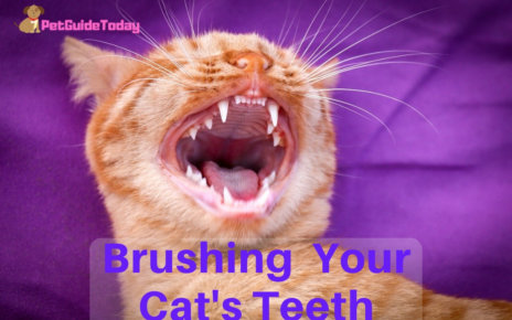 Brushing Your Cats Teeth