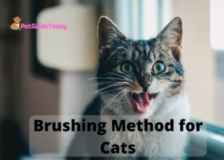 Brushing Method for Cats