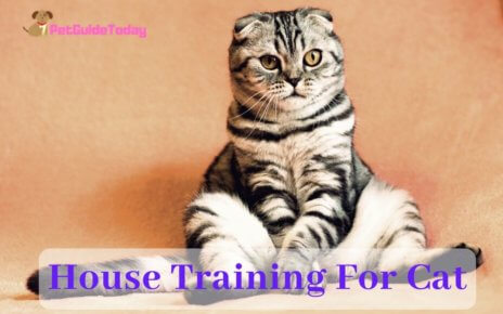 House Training For Cat