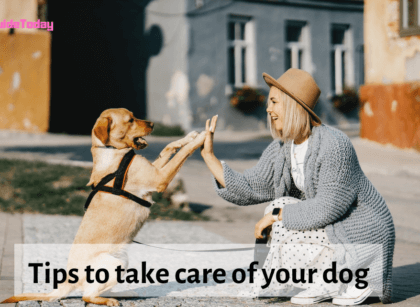 tips to take care of dog