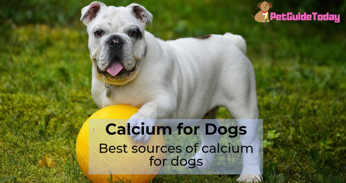 Best sources of calcium for dogs
